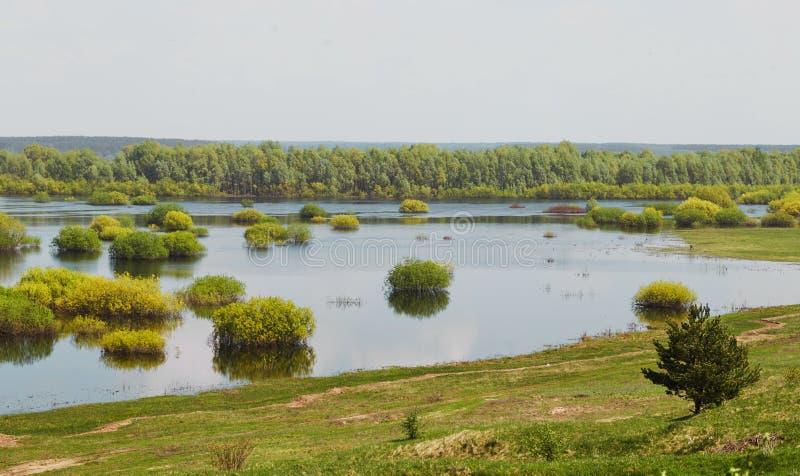 Sorgente prato del terreno alluvionale sommerso da un fiume fotografia stock