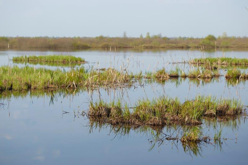Sorgente prato del terreno alluvionale sommerso da un fiume immagine stock libera da diritti