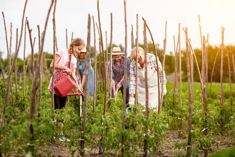 Sorgfältige Familie, die im Garten arbeitet lizenzfreies stockbild