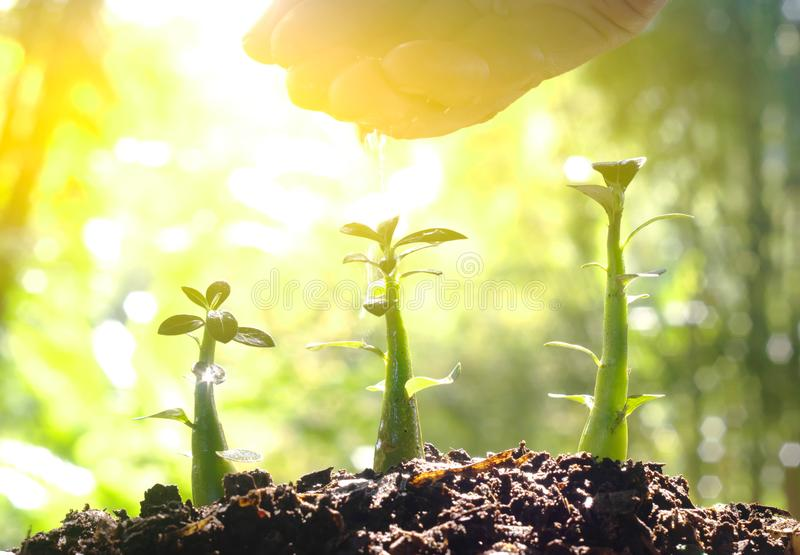 Sorgfalt der neuen lebens- Bewässerungsjungpflanze - Weinlese-Effekt lizenzfreie stockfotografie