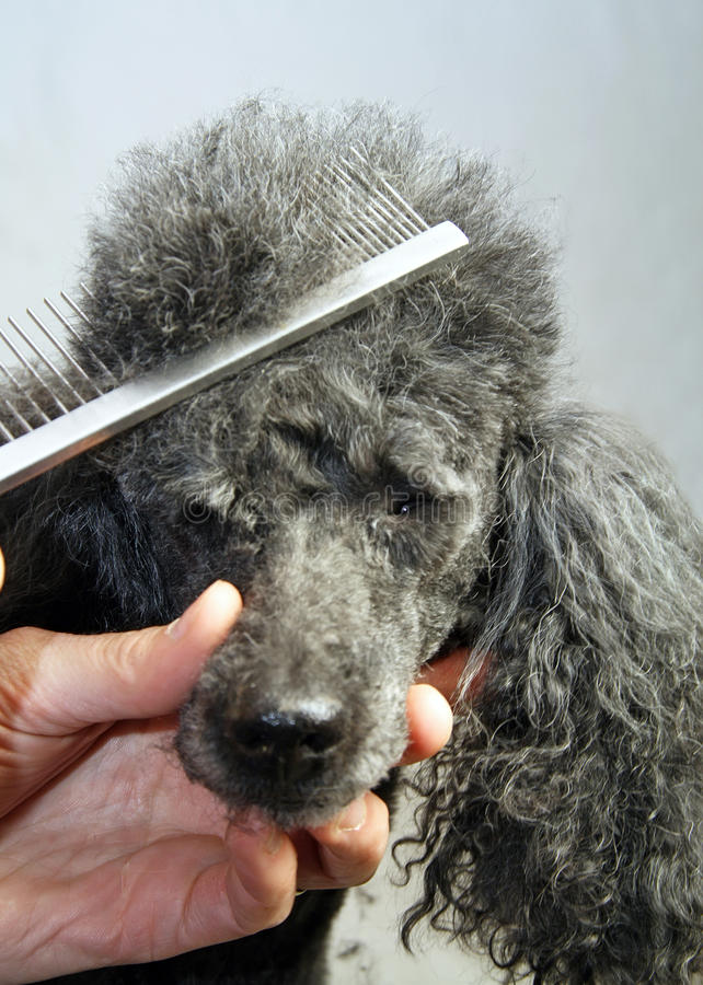 Sorgfalt eines Hundes stockfotografie
