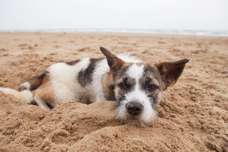 Sorgframsida av den hemlösa hunden som ligger på sandstranden med ensam känsel arkivfoto