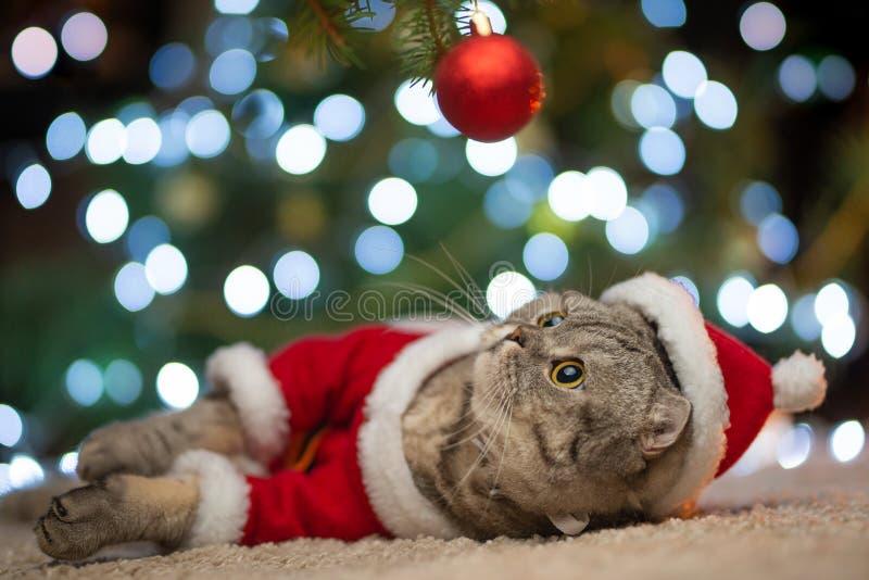 Soriano ed il gatto felice Il Natale condisce 2018, il nuovo anno, le feste e le feste fotografie stock