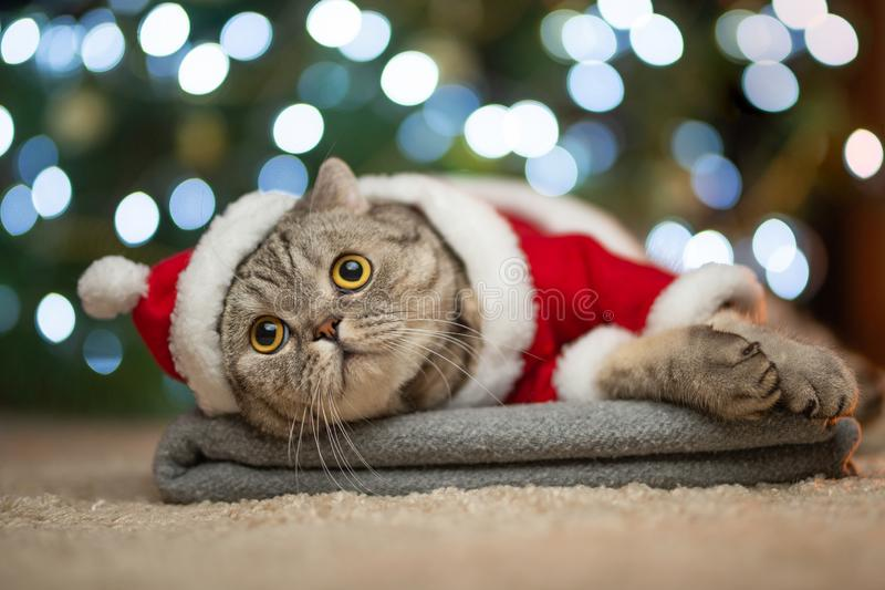 Soriano ed il gatto felice Il Natale condisce 2018, il nuovo anno, le feste e le feste fotografia stock libera da diritti