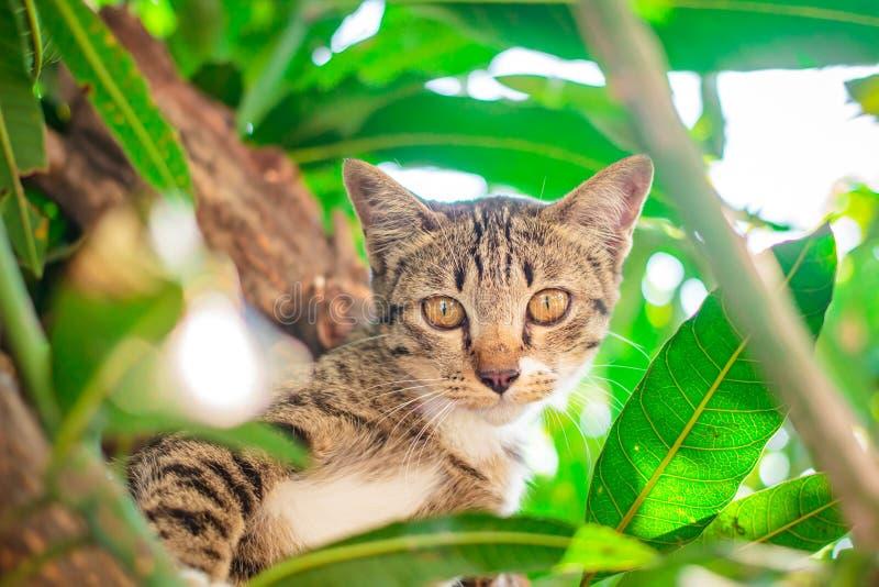 Soriano sveglio Kitten Relaxing fotografie stock libere da diritti