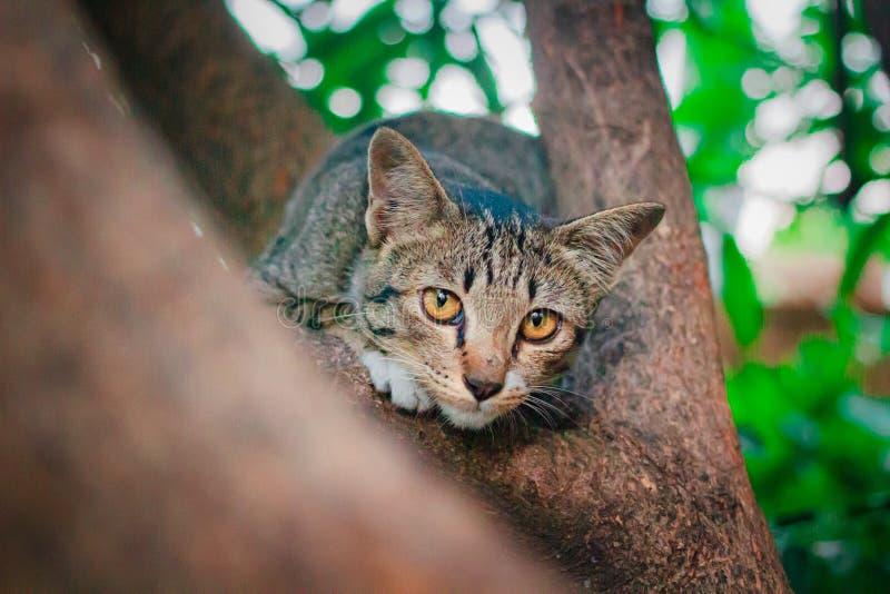Soriano sveglio Kitten Relaxing sopra l'albero fotografia stock