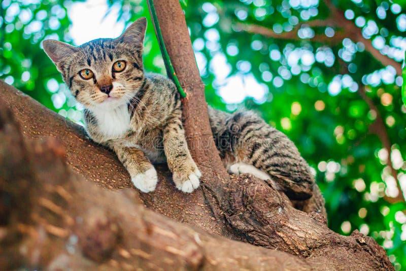 Soriano sveglio Kitten Relaxing sopra l'albero fotografie stock libere da diritti
