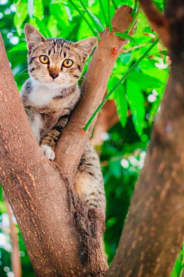 Soriano sveglio Kitten Relaxing sopra l'albero fotografie stock