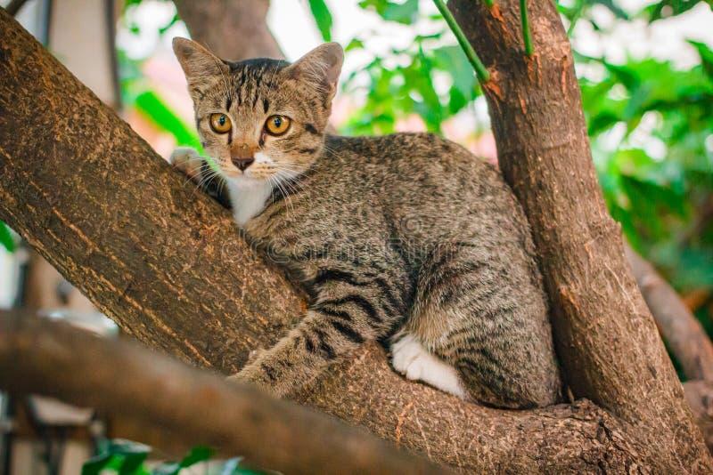 Soriano sveglio Kitten Relaxing sopra l'albero immagini stock libere da diritti