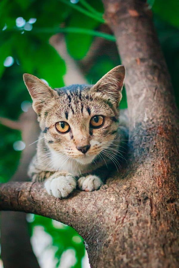 Soriano sveglio Kitten Relaxing sopra l'albero fotografia stock libera da diritti