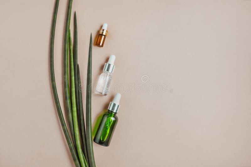 soro do cabelo Cabelo e pele naturais do cuidado Conceito saud?vel do cabelo Configuração lisa, minimalismo, cor pastel fotografia de stock royalty free