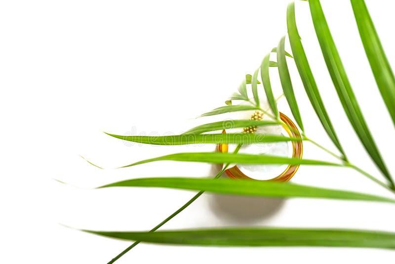 Soro, gel ou máscara para a pele de beleza, como produto cosmético, com folha de palma tropical e flor em fundo branco imagem de stock