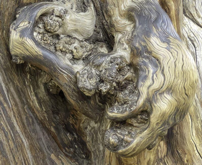 Sorprendiendo, fragmento hermoso del árbol, textura agradable Front Light foto de archivo