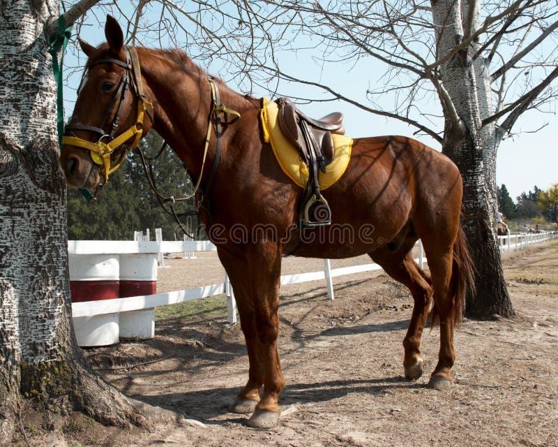 Download Sorrel Horse Royalty Free Stock Photo - Image: 11168435