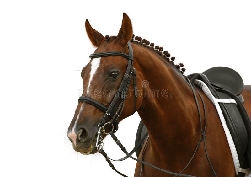 Download Sorrel Horse Royalty Free Stock Image - Image: 6422716