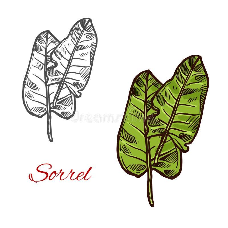 Sorrel salad vector sign royalty free illustration