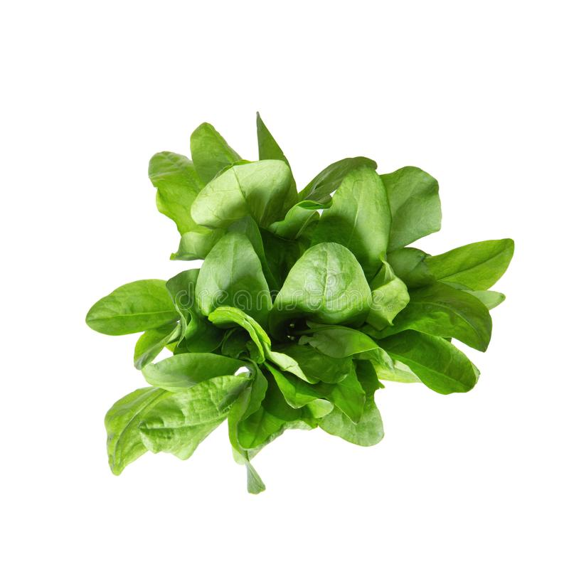 Sorrel tuft on white isolated background, view from above. Sorrel tuft on white isolated background. View from above stock image