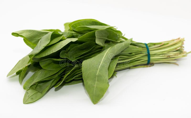 Sorrel on a white background. Photo in the studio royalty free stock photo