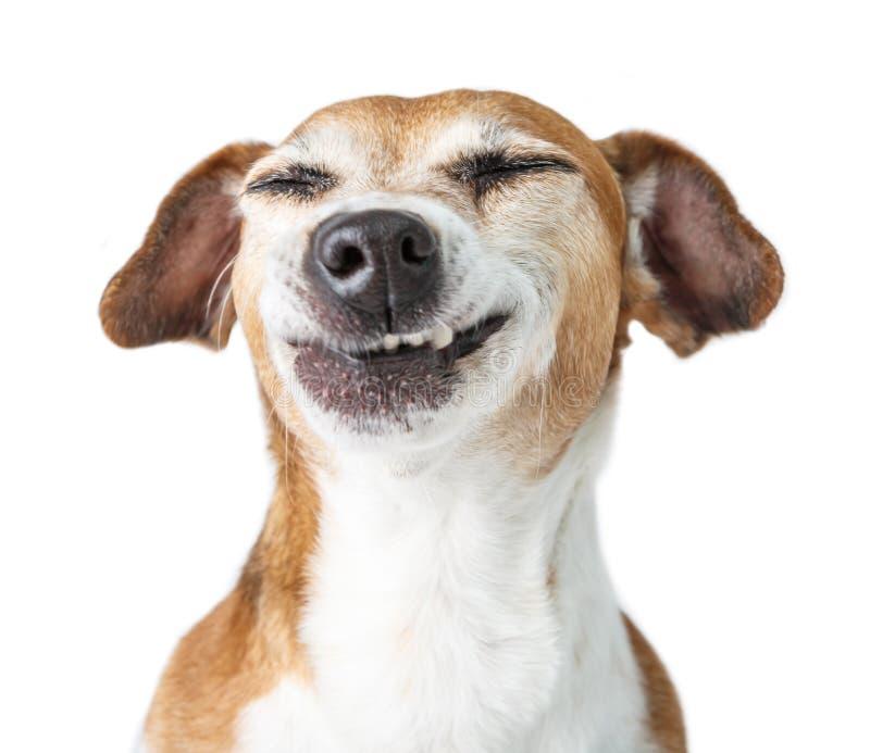 Sorri o animal de estimação dos dentes imagens de stock