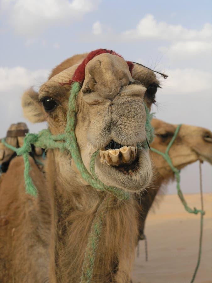 Download Sorriso fotografia stock. Immagine di occhio, india, piede - 220048