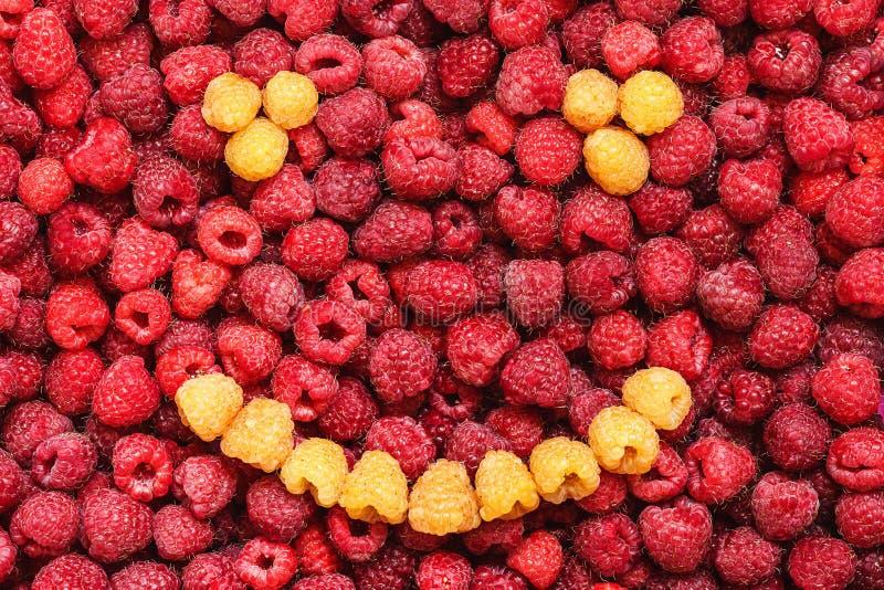 Sorriso dei lamponi gialli su fondo dei lamponi rossi immagini stock