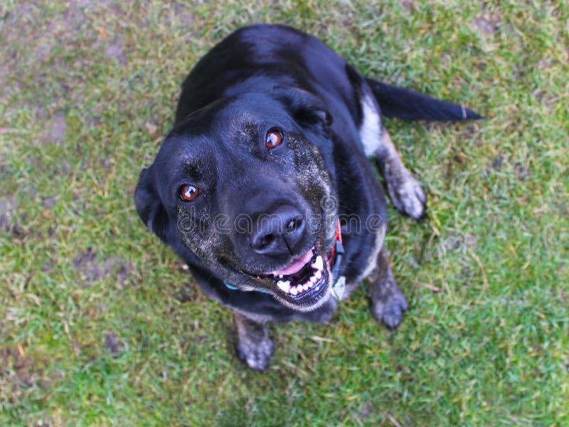 Sorriso del cane fotografia stock libera da diritti