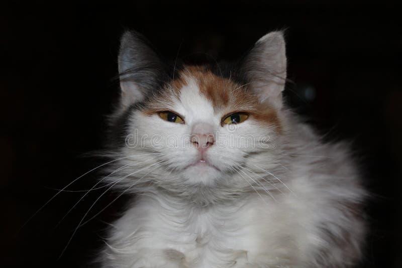 Sorriso do gato fotografia de stock