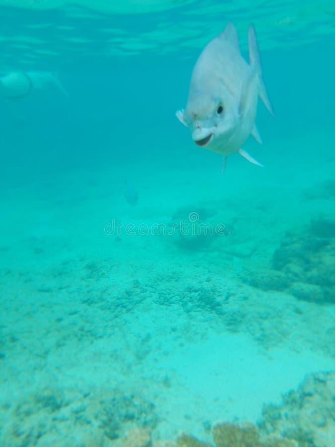 Sorriso dos peixes imagens de stock