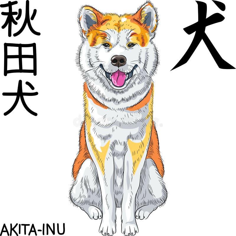 Sorrisos da raça de Akita Inu Japanese do cão do esboço do vetor ilustração royalty free