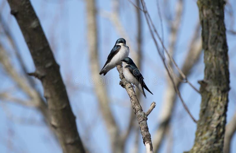 Sorso di albero alla prerogativa della fauna selvatica di Exner in Illinois fotografie stock
