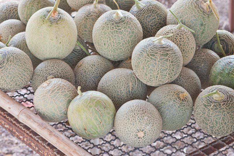 Sort out Japanese melons royalty free stock image