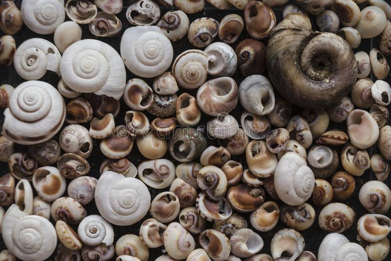Sorterade skal av många format finnas på havsstränder Närbild av snäckskalsamlingen i solig sommardag Massor av cockleshell royaltyfria bilder