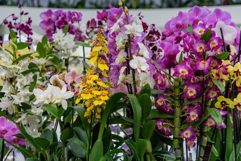 sortes multicolores et diff rentes d 39 orchid es dans les jardins n erlandais de keukenhof de. Black Bedroom Furniture Sets. Home Design Ideas