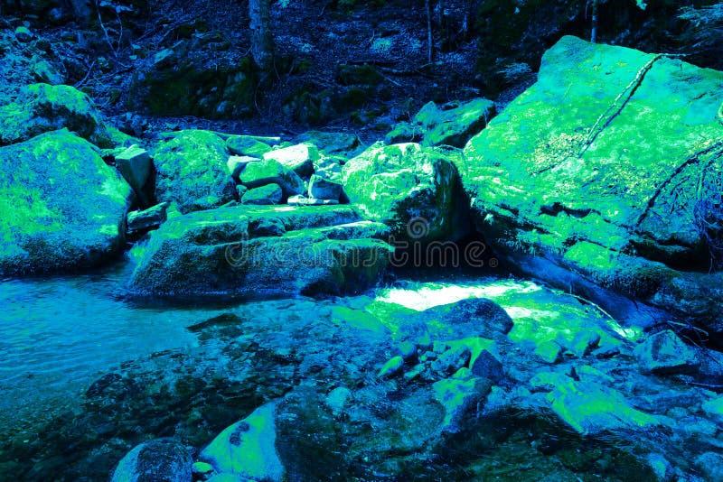 Sortie des algues de chlorophylle pendant l'ère primaire photo libre de droits