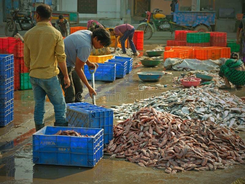 Sortieren von Fischen für Verkauf auf dem Kai in Diu-Insel, Gujarat lizenzfreies stockfoto