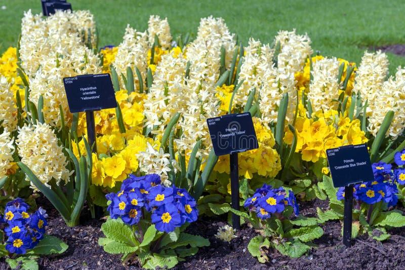 Sortierte bunte Blumen gewachsen in einem Blumenbeet an Kew-Gärten, London, England lizenzfreie stockfotos