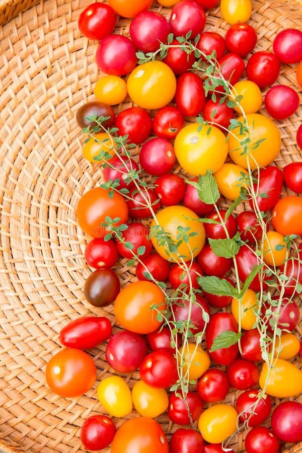 Sortierte bunte Tomaten stockfotografie