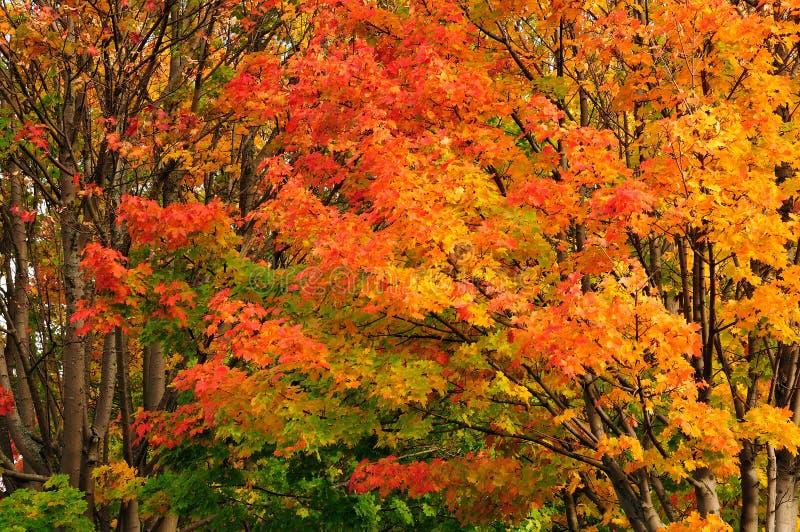 Sortierte Farben der Natur stockbilder