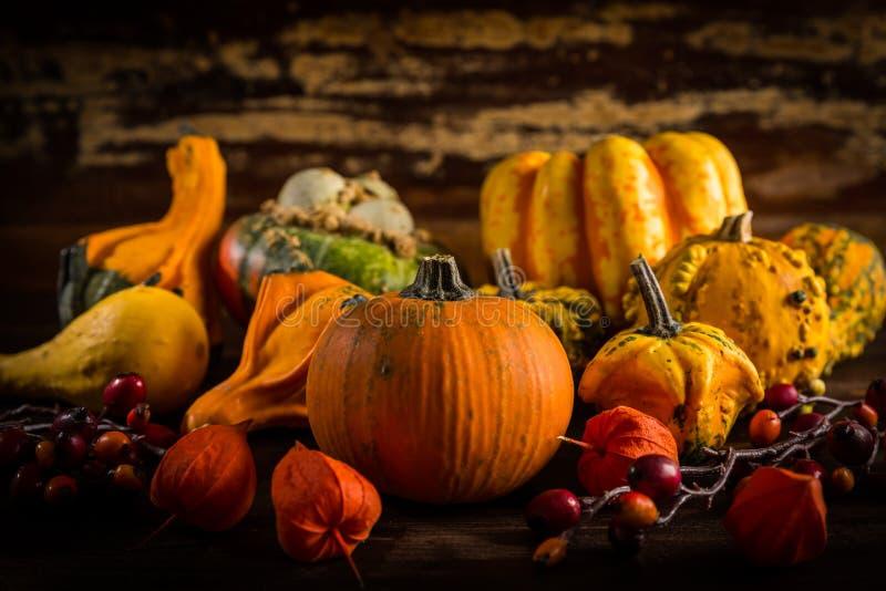 Sortierte Kürbise für Danksagung und Halloween lizenzfreie stockfotos