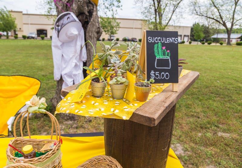 Sortierte Succulents mit Bienen-Bienenstock-Klagen-Hintergrund lizenzfreie stockfotografie