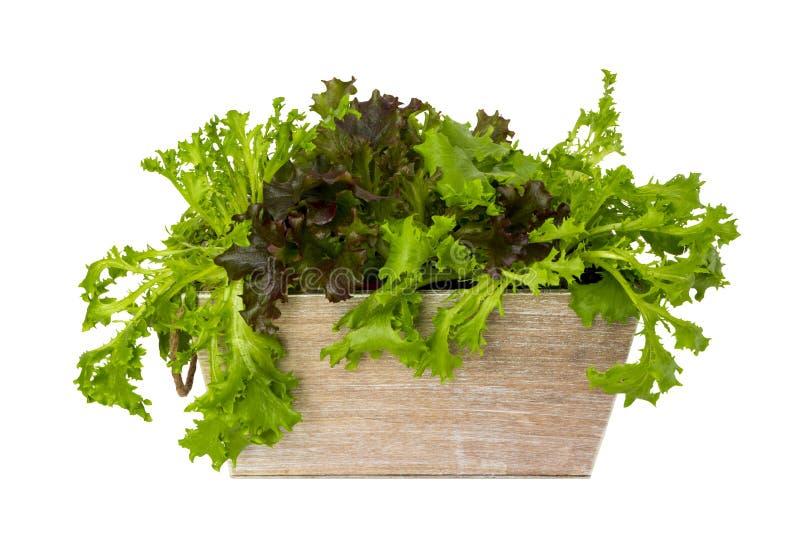 Sortierter Kopfsalat stockfoto