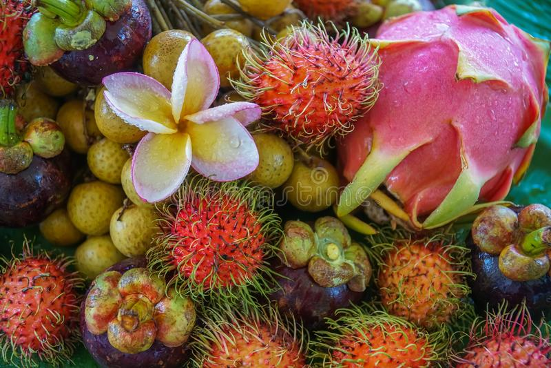 Sortiment av exotisk tropisk thai frukt inklusive rambutanen, dragonfruit, longan, mangosteenen och mango royaltyfri foto