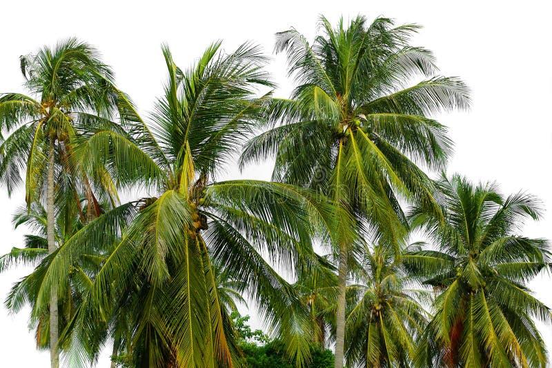 sorts au-dessus des palmiers blancs photos libres de droits