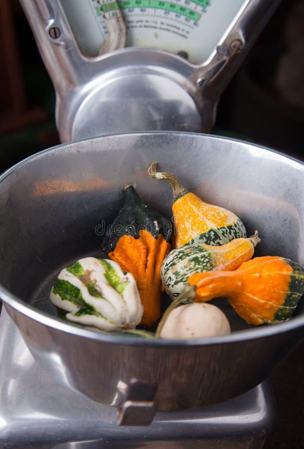 Sorts of pepo pumpkins stock image