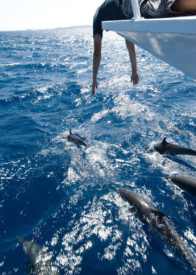 Sorveglianza del delfino fotografia stock libera da diritti