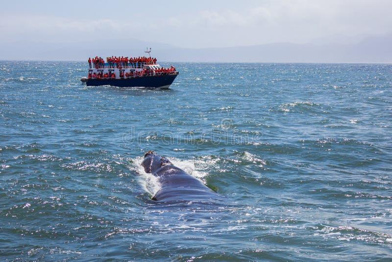 Sorveglianza della balena immagini stock libere da diritti