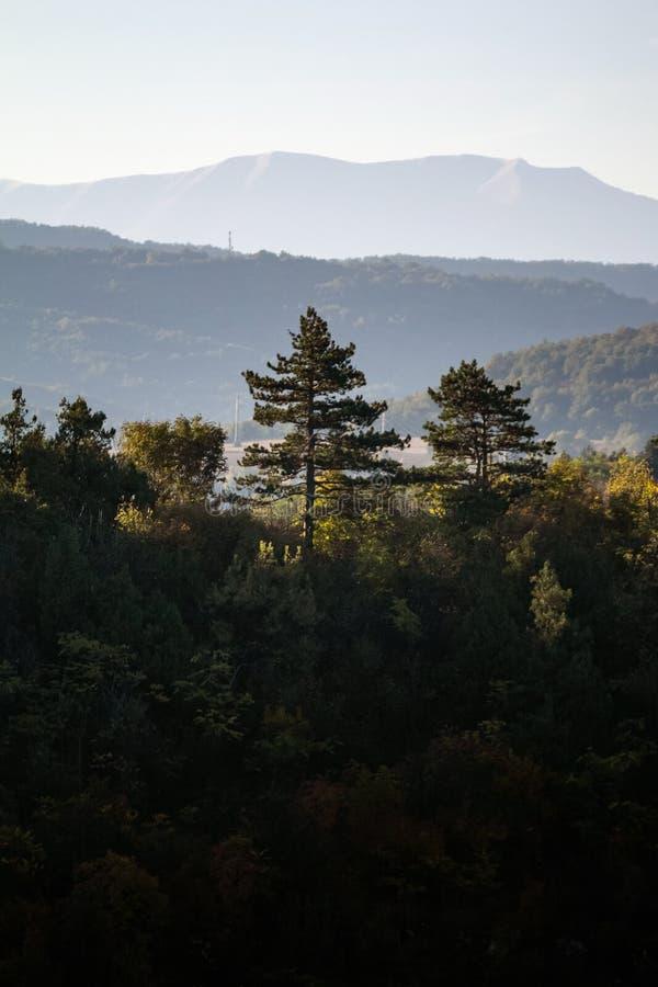 Sosna dowcipu góra w tle przy wschód słońca Wczesnego poranku strzał halni drzewa popiera zaświeca ciepłym słońca światłem obrazy stock