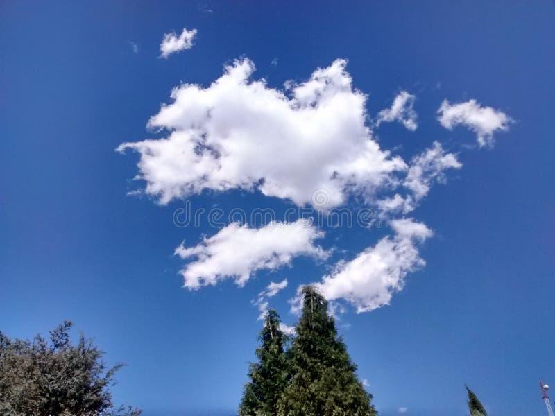 Sosna i niebieskie niebo zdjęcia stock