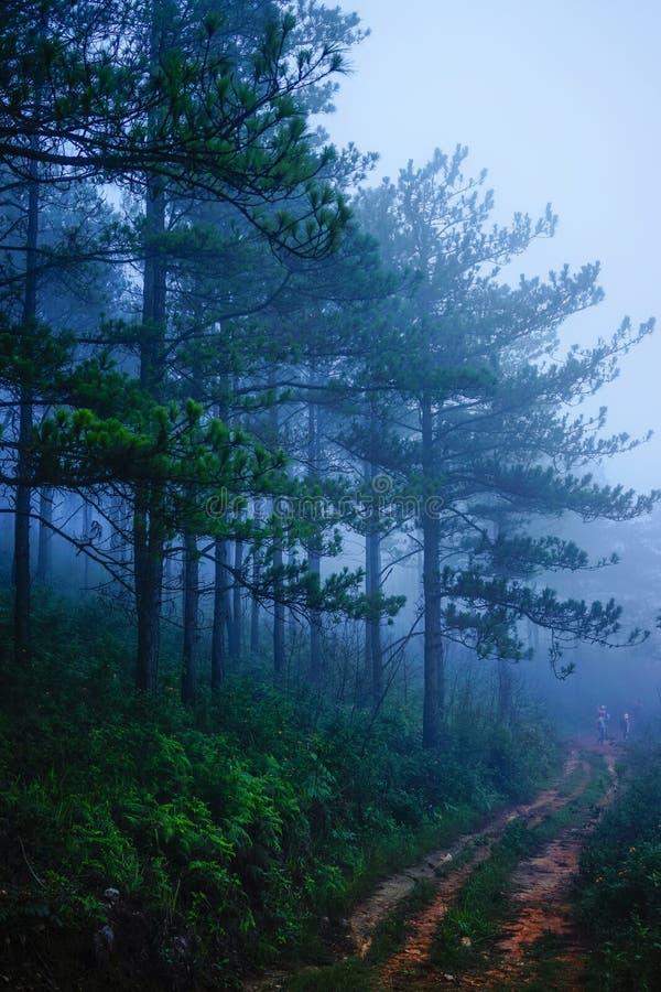 Sosna las przy mglistym dniem obrazy royalty free