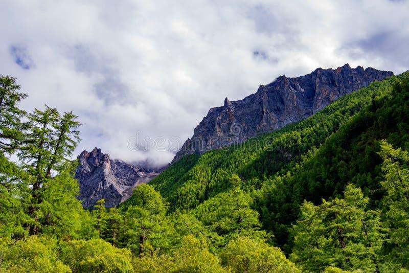 Sosna lasy przy bazą chabeta smoka śniegu góra zdjęcie stock